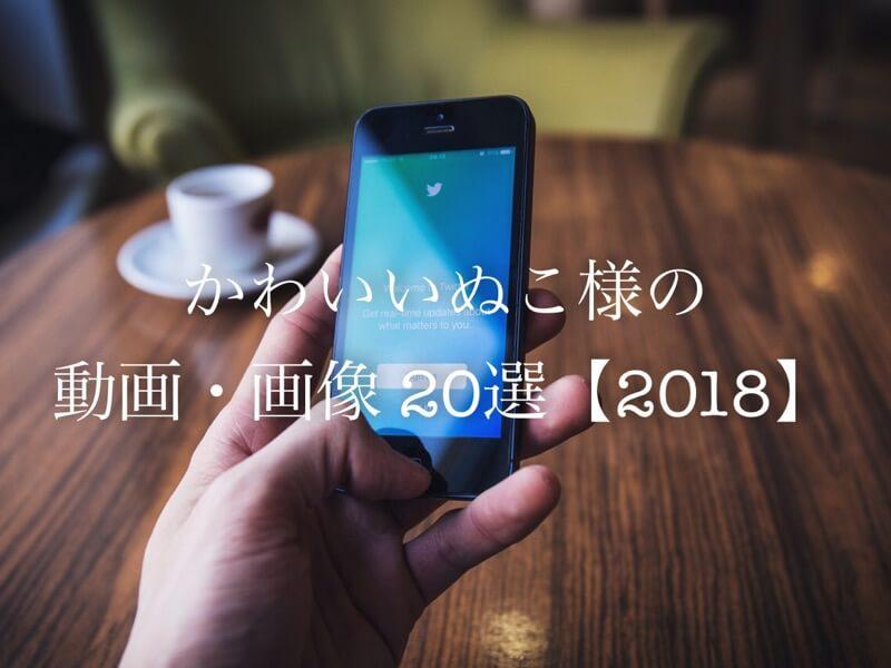 Twitterの可愛い・癒される「ねこ動画・画像」20選!【2018】
